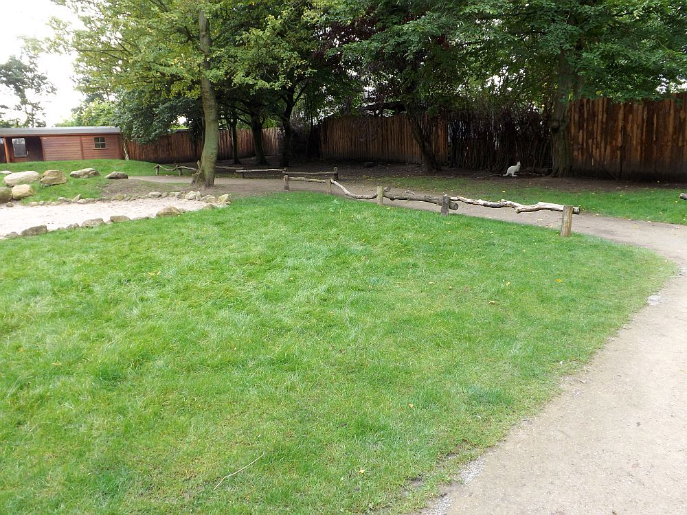 Begehbare Känguruanlage (Tierpark Hamm)