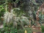 Schmetterlingshaus (Zoo Antwerpen)