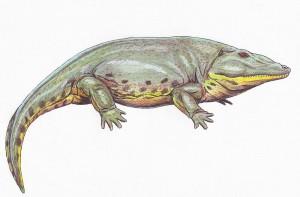Eryops megacephalus (Dmitry Bogdanov)