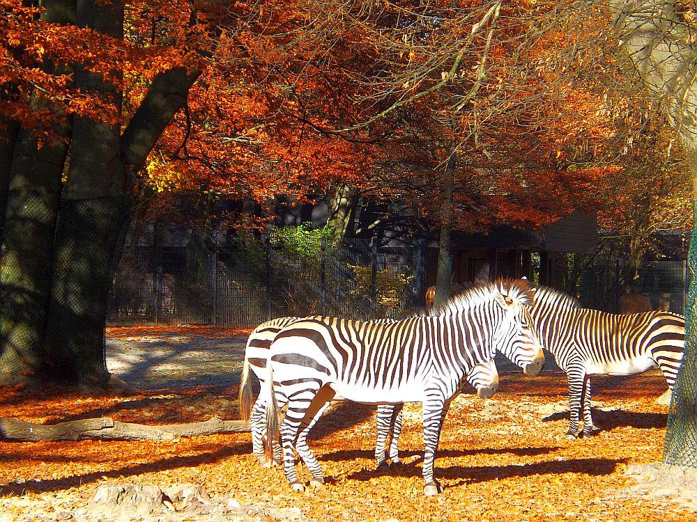 Afrikanlage (Tierpark Hellabrunn)