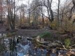 Anlage für Kronenkraniche und Pinselohrschweine (Tierpark Hellabrunn)