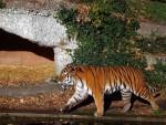 Tigeranlage (Tierpark Hellabrunn)