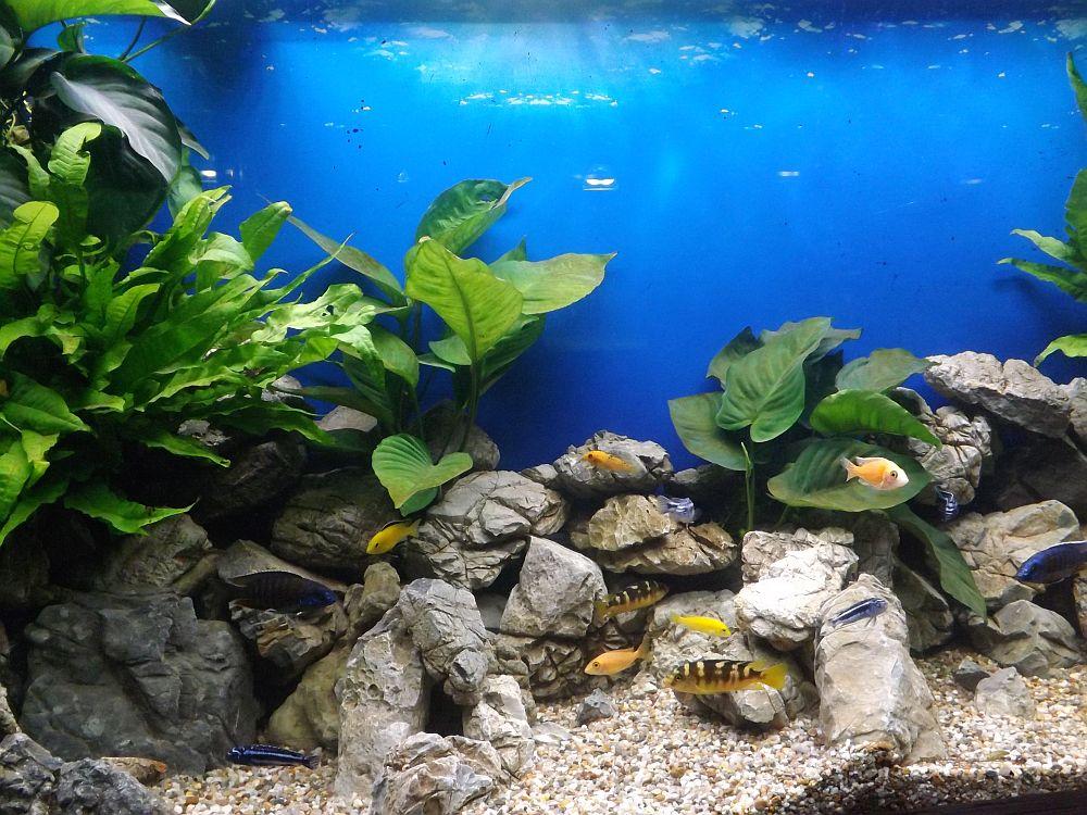 Aquarium (Tierpark Gotha)