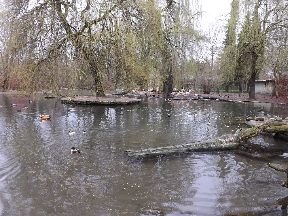 Flamingoteich (Zoo Augsburg)