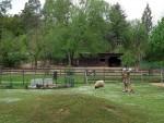 Haustieranlage (Tierpark Kunsterspring)