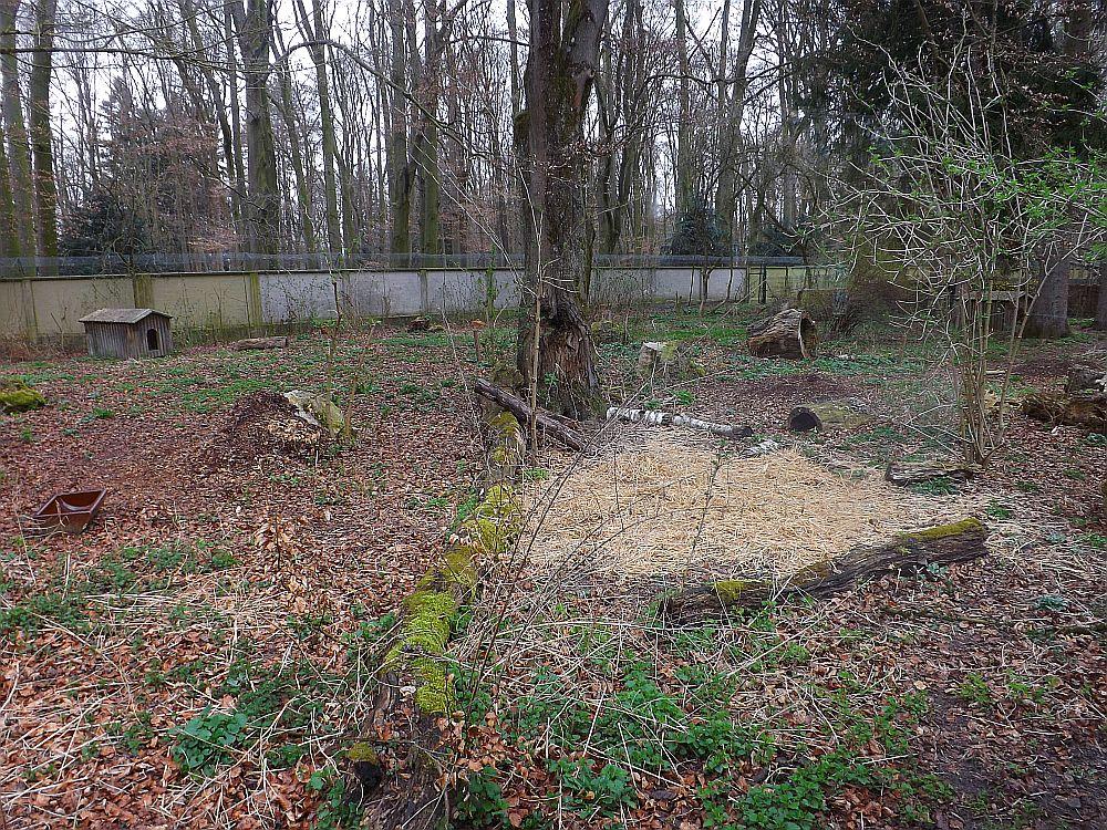 Mähnenwolfanlage (Zoo Augsburg)