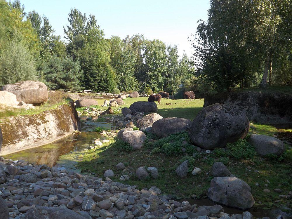 Moschusochsenanlage (Gaiazoo Kerkrade)