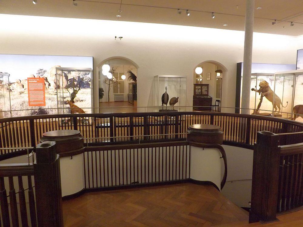 Oberstes Stockwerk (Naturkundemuseum Coburg)