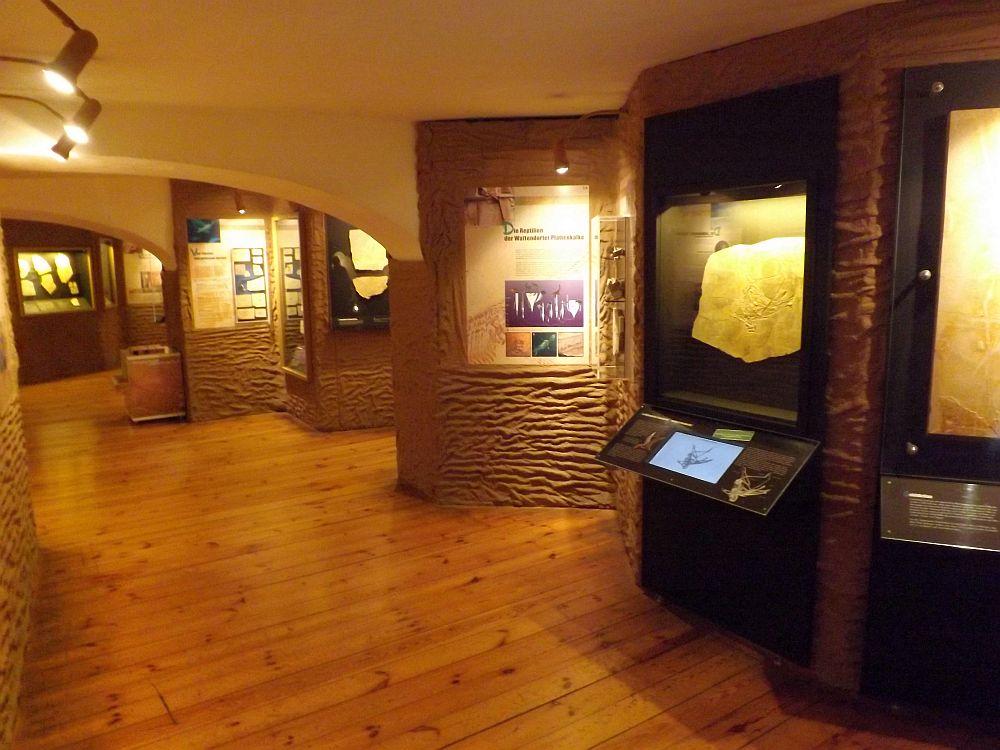 Sonderausstellung (Naturkunde-Museum Bamberg)