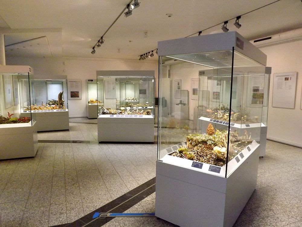 Sonderausstellung Pilze (Naturkundemuseum Coburg)