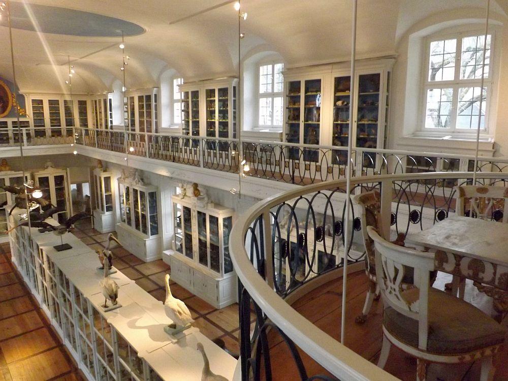 Vogelsaal (Naturkunde-Museum Bamberg)