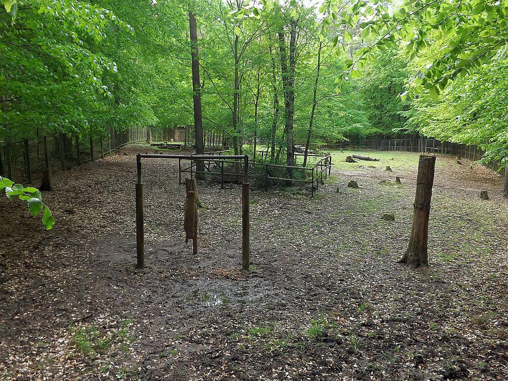 Wisentanlage (Tierpark Kunsterspring)