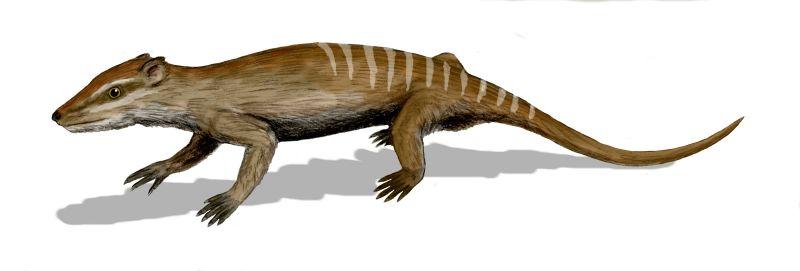 Yanoconodon allini, ein Vertreter der Eutriconodonta (© N. Tamura)