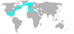 Das Verbreitungsgebiet der Basstölpel