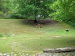 Riesenkänguruanlage (Zoo Berlin)