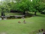 Südamerikaanlage (Zoo Berlin)