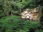 Gibbonanlage (Erlebniszoo Hannover)