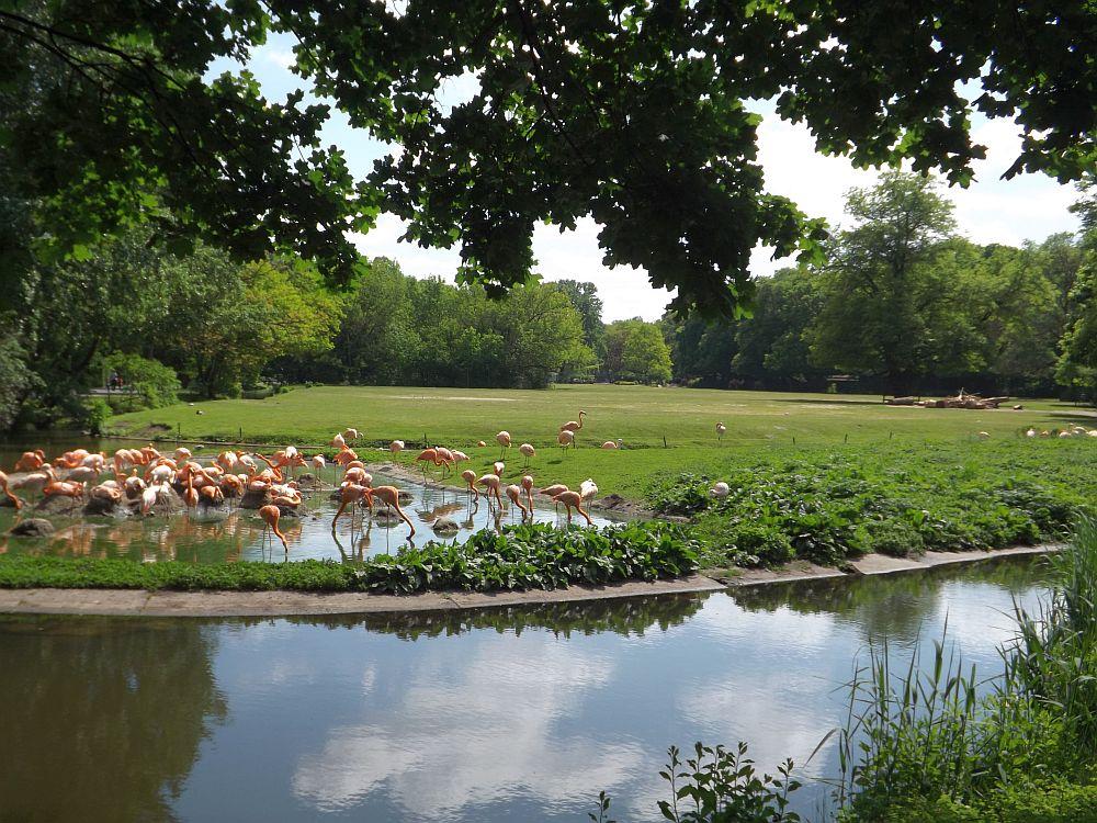 Kamelwiese und Flamingolagune (Tierpark Berlin)
