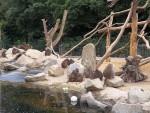 Mantelpaviananlage (Zoo Augsburg)