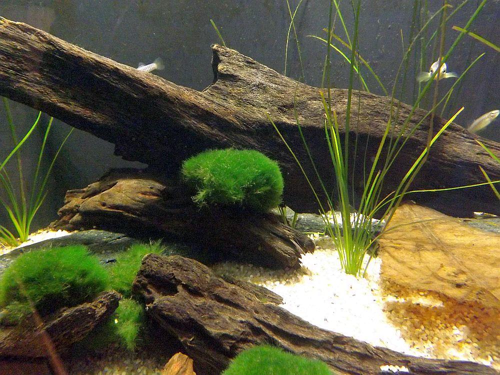 Aquarium für Mittelmeerkärpflinge (Sea Life München)