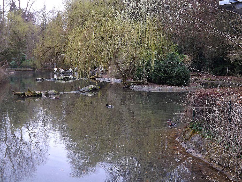 Pelikanweiher (Zoo Augsburg)