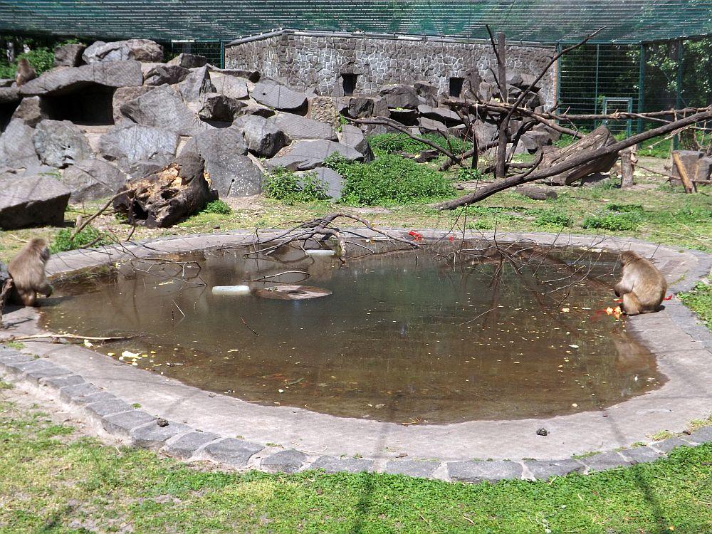 Japanmakakenanlage (Tierpark Berlin)