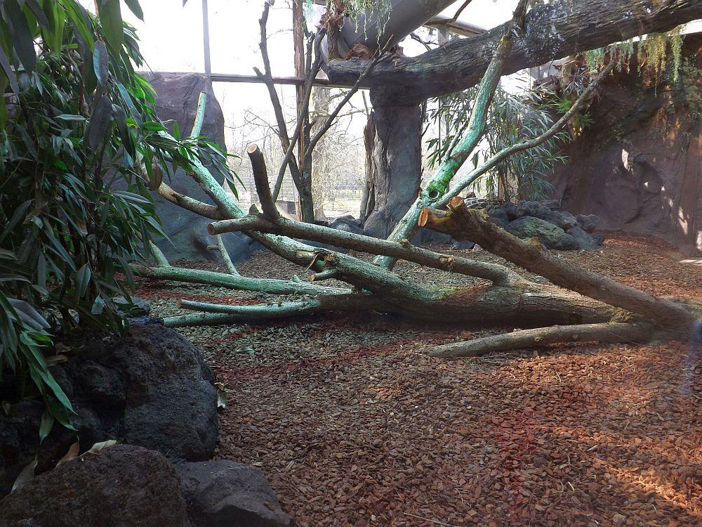 Anlage der Tigerpythons (Tierpark Hellabrunn)