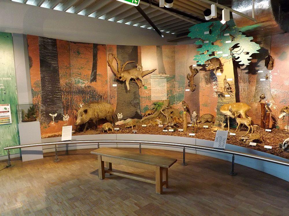 Bodenseemuseum