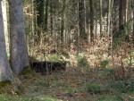 Erweiterung des Braunbärgeheges (Wild- und Freizeitpark Bodanrück)