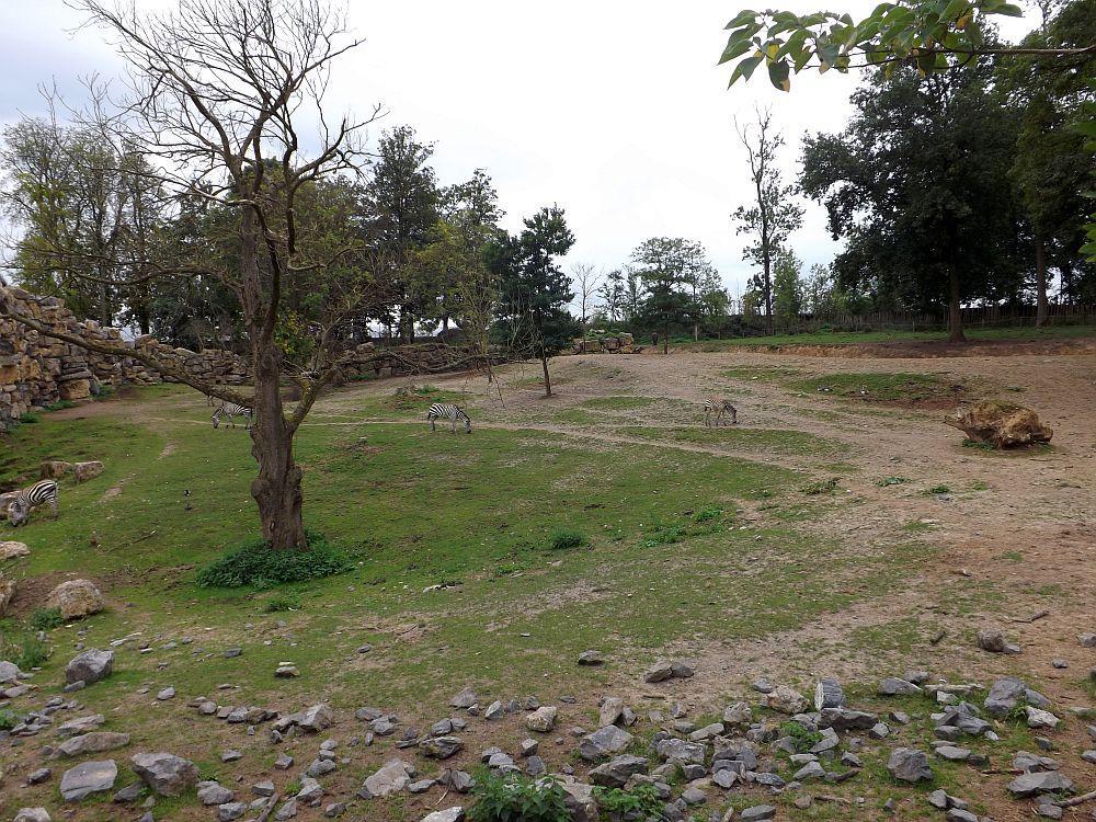 Afrikaanlage (Pairi Daiza)
