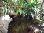Schildkröten, Große Barsche und Wasseragamen (Akva Tera)