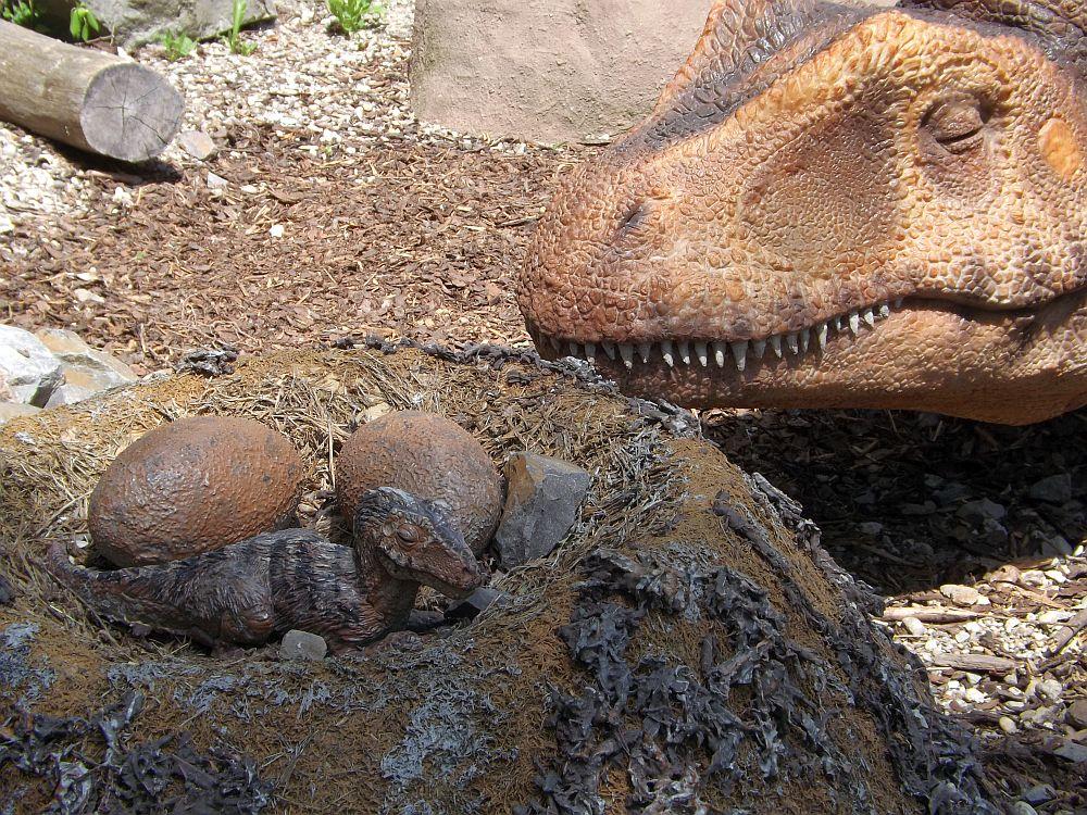 Allosaurus (Zoo Bratislava)