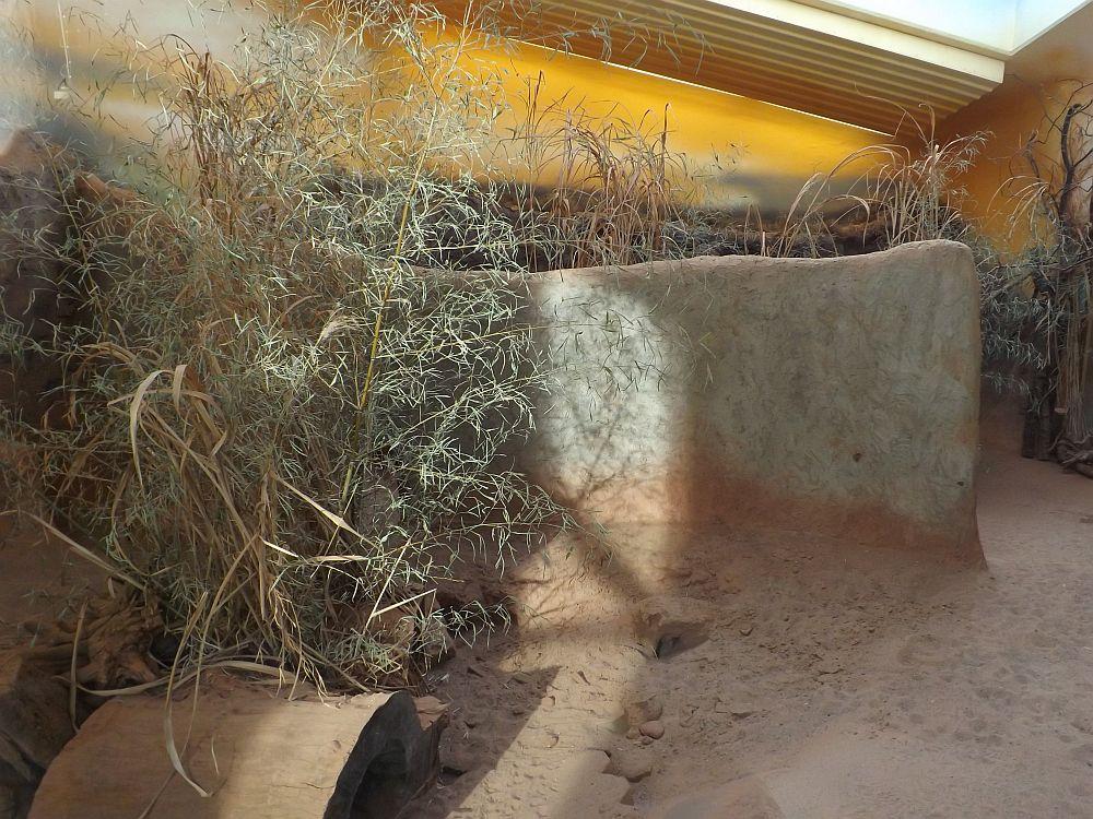 Innenanlage derLöffelhunde (Thüringer Zoopark)