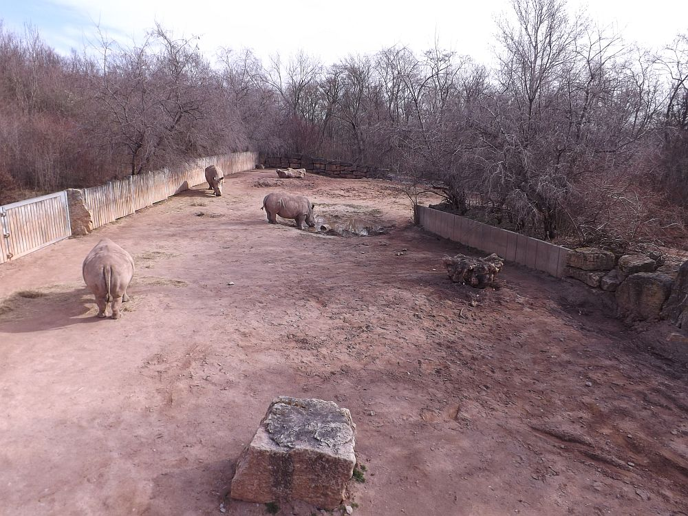 Nashornanlage (Thüringer Zoopark)