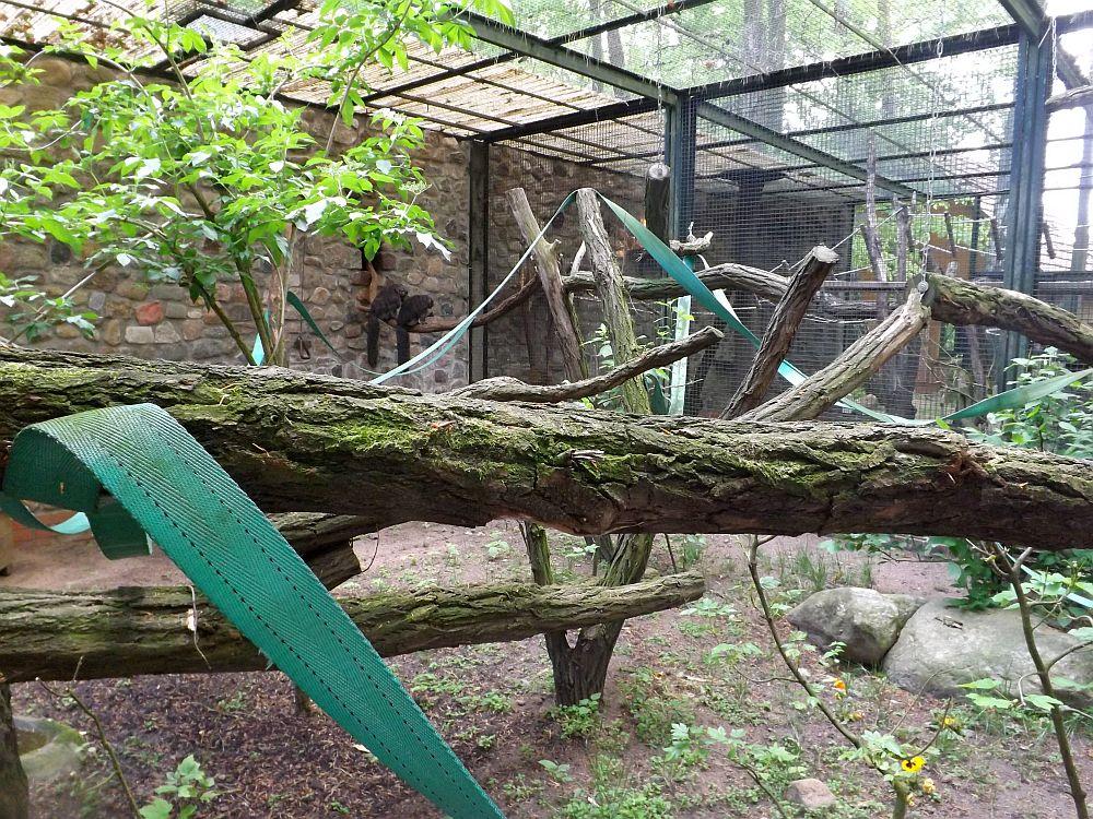 Anlage für südamerikanische Affen (Zoo Eberswalde)