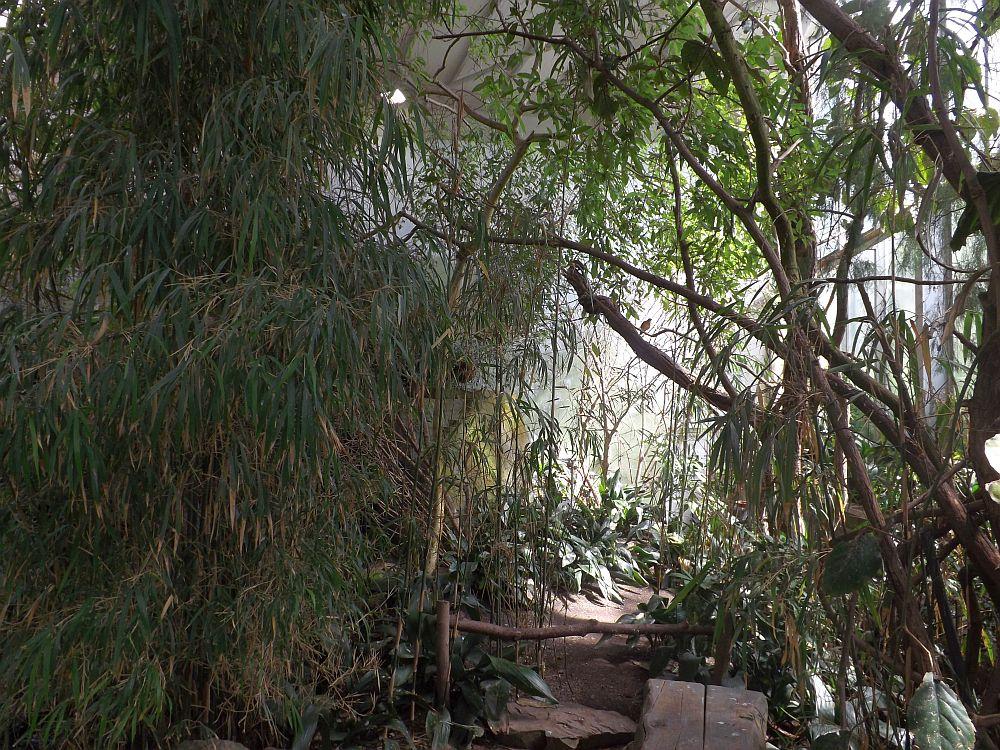 Sichuanhalle (Zoo Prag)