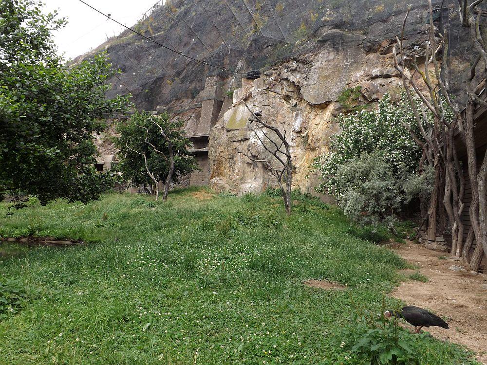 Waldrappanlage (Zoo Prag)