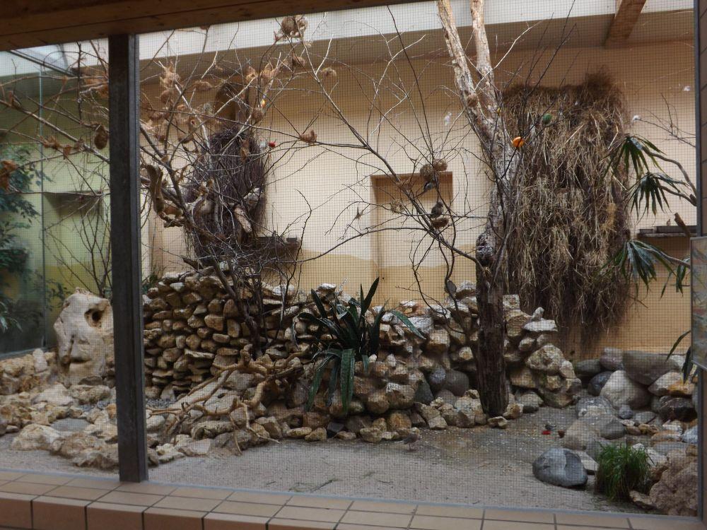 Voliere für Webervögel und andere (Zoo Augsburg)