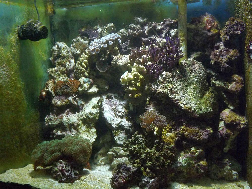 Meerwasseraquarium (Akva Tera)