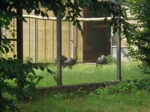 Hornwehrvögel (Weltvogelpark Walsrode)