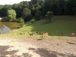 Freigehege für Damhirsche (Wildpark Schwarze Berge)