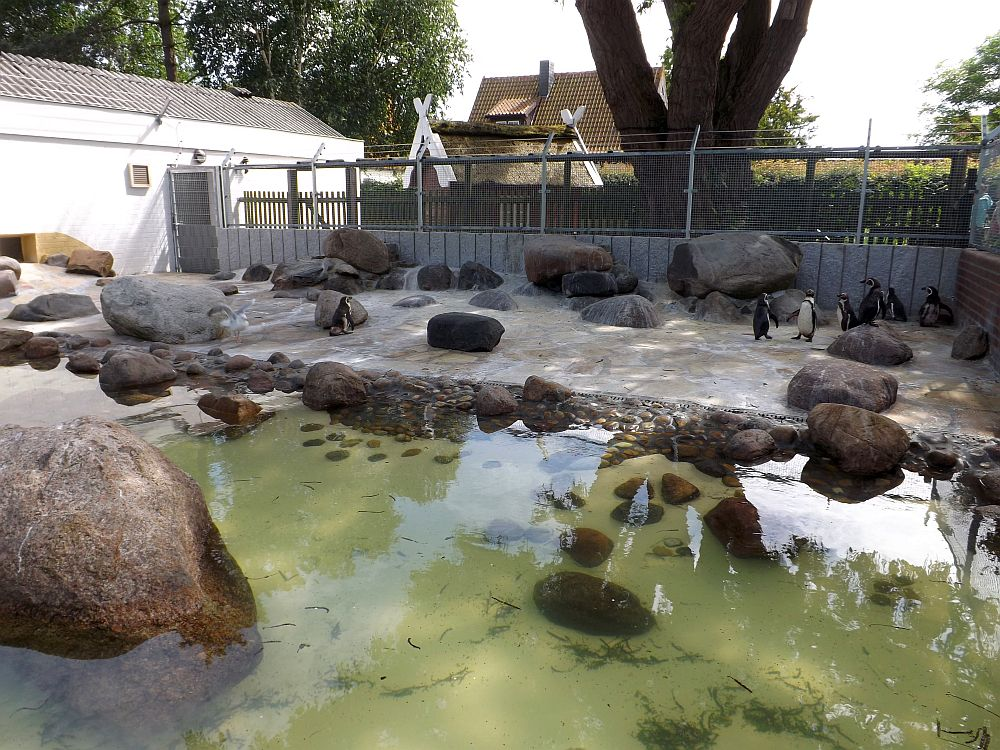 Pinguinanlage (Zoo im Kurpark)