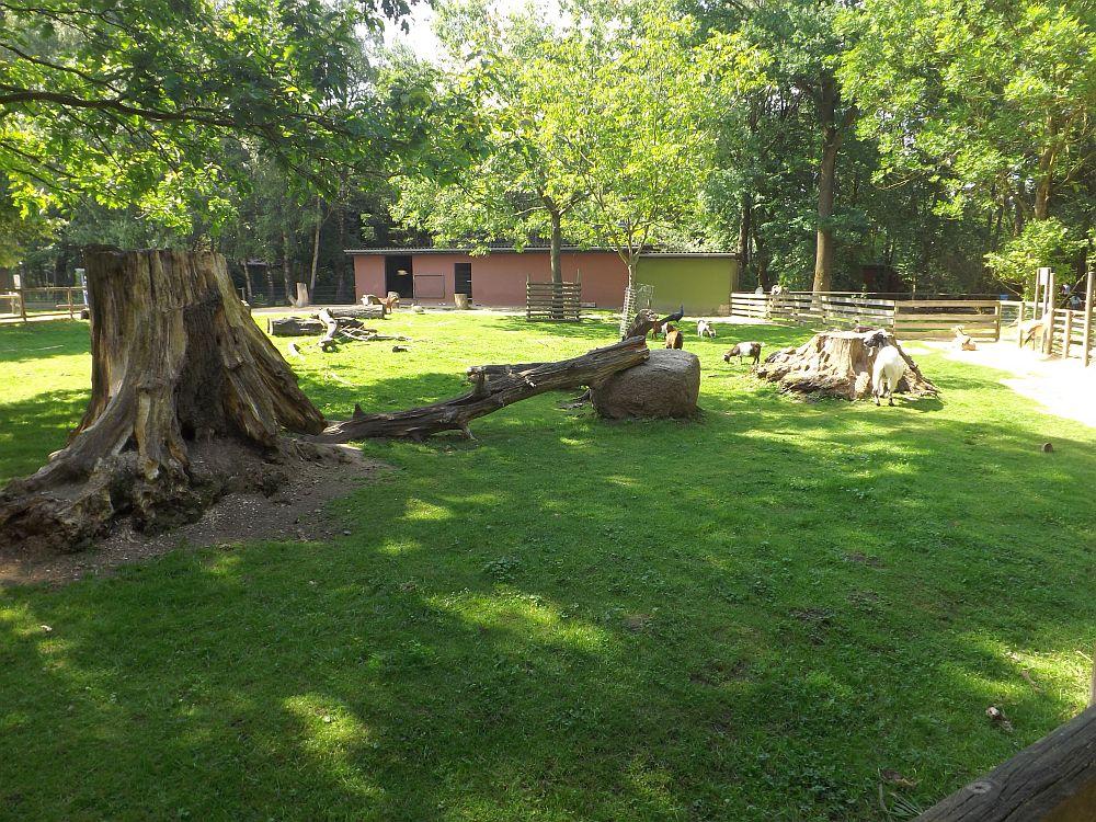 Streichelzoo (Tiergarten Ludwigslust)