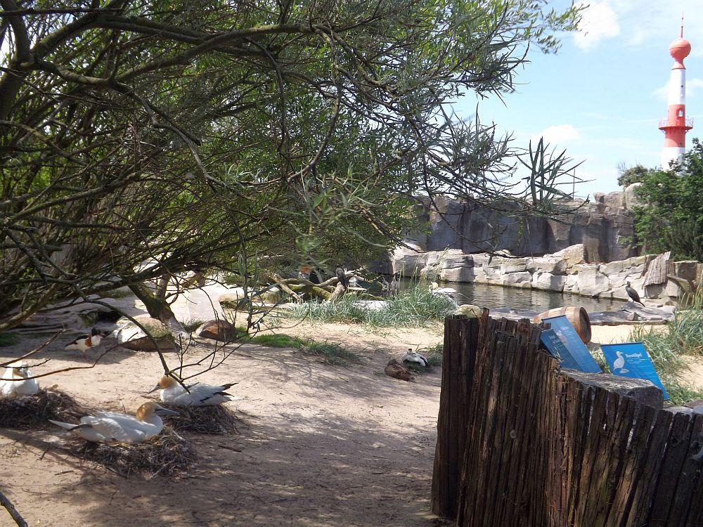 Tölpelanlage (Zoo am Meer)