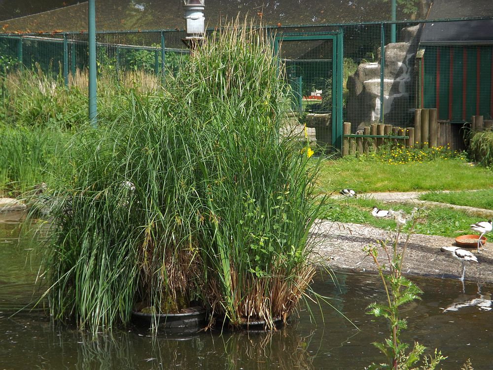 Wasservogelvoliere (Zoo im Kurpark)