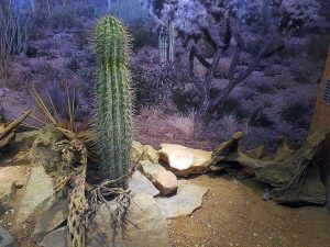 Klapperschlangenterrarium (Reptilienhaus Unteruhldingen)