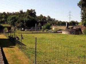 Römischer Haustierpark Augst