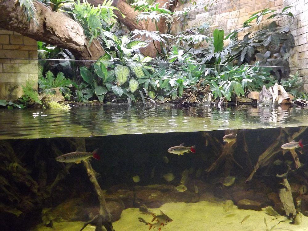 Amazonasaquarium (Zoo Leipzig)