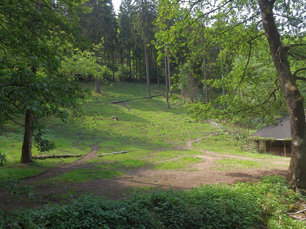 Heckrindanlage (Tierpark Suhl)