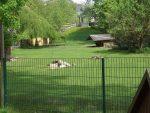 Känguruanlage (Tiergarten Falkenstein)